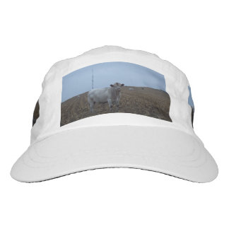 White Bull in a newly harvested Iowa Corn Field Hat