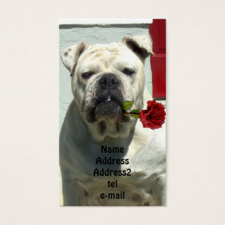 White bulldog with rose business card