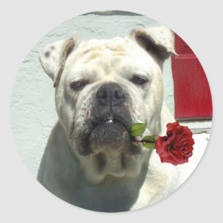 White bulldog with rose large stickers