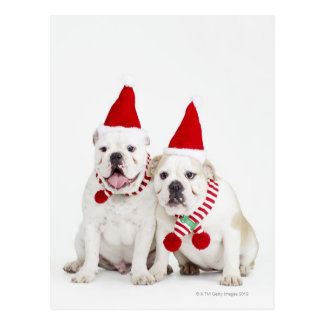 White bulldogs post card