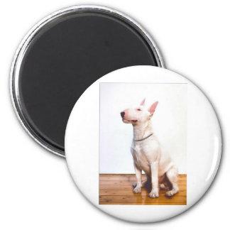 White Bully 6 Cm Round Magnet