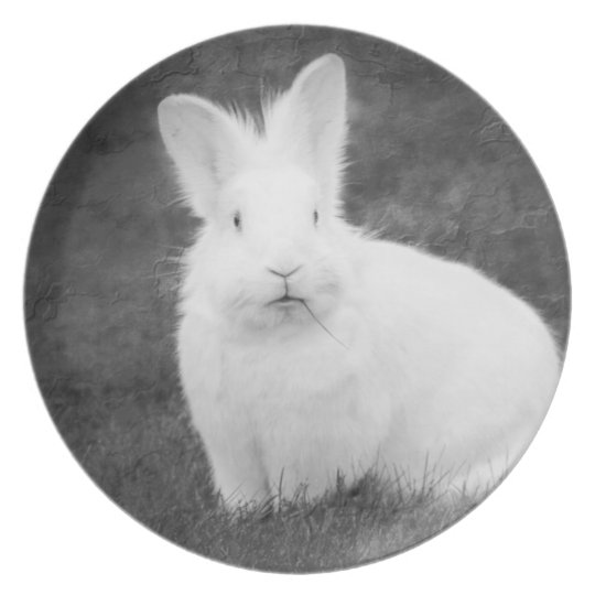 White bunny rabbit plate