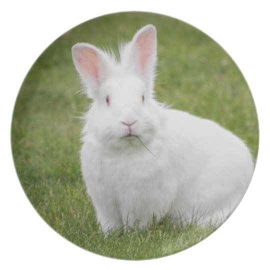 White bunny rabbit plate
