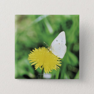 White butterfly feeding on a dandelion 15 cm square badge