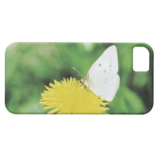 White butterfly feeding on a dandelion iPhone 5 covers