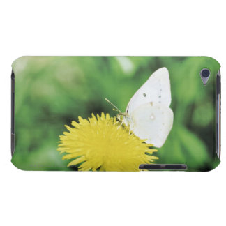 White butterfly feeding on a dandelion iPod touch Case-Mate case