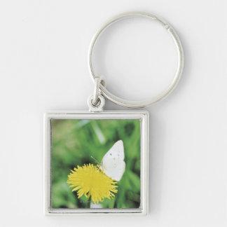 White butterfly feeding on a dandelion key ring