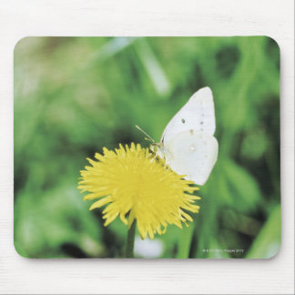 White butterfly feeding on a dandelion mouse mat