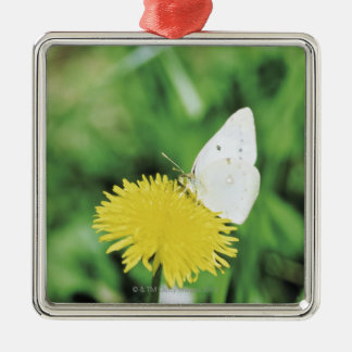 White butterfly feeding on a dandelion Silver-Colored square decoration