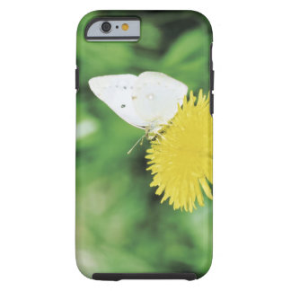 White butterfly feeding on a dandelion tough iPhone 6 case
