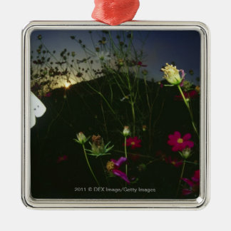 White Butterfly in flight at sunset Christmas Ornament