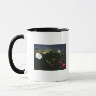 White Butterfly in flight at sunset Mug