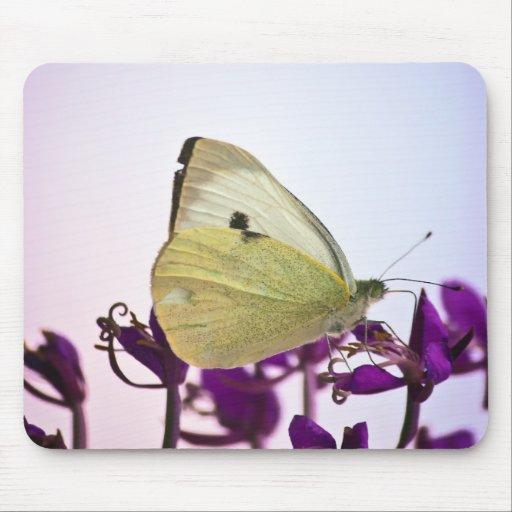 White Butterfly on Purple Flowers Mousepads