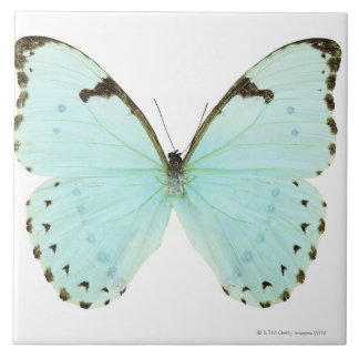 White butterfly large square tile