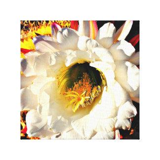 White Cactus Flower Canvas