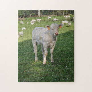 White calf in a field jigsaw puzzle