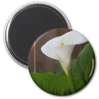 White Cali Lily 6 Cm Round Magnet