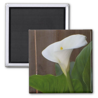 White Cali Lily Square Magnet