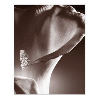 White Calla Lily Flower Black Background Photographic Print