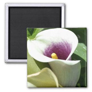 White Calla Lily Square Magnet