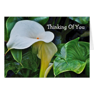 "WHITE CALLA LILY, ""THINKING OF YOU"" (CUSTOMIZABLE) NOTE CARD"