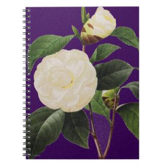 White Camellia, 1833 Notebooks