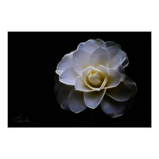 white camellia colour poster