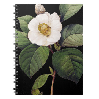 White Camellia Notebook