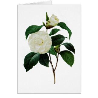 White Camellias by Pierre-Joseph Redoute Card