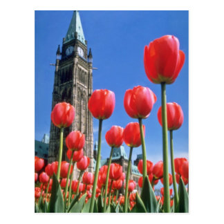 White Canadian Tulip Festival, Peace Tower with tu Postcard