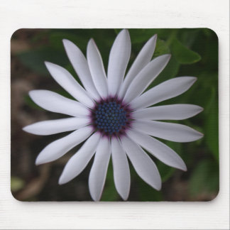 WHITE CAPE DAISY FLOWER Mouse Pad Mat