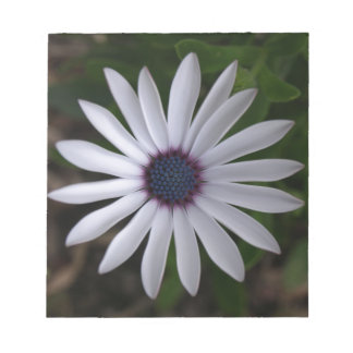 WHITE CAPE DAISY FLOWER Notepad
