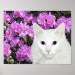 White cat azaleas