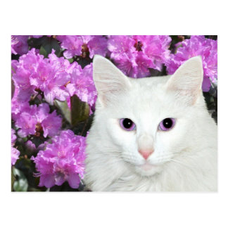White cat azaleas postcard
