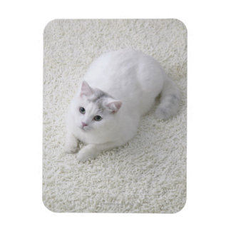 White cat looking up rectangular photo magnet