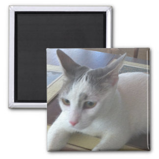 White Cat Table Refrigerator Magnet