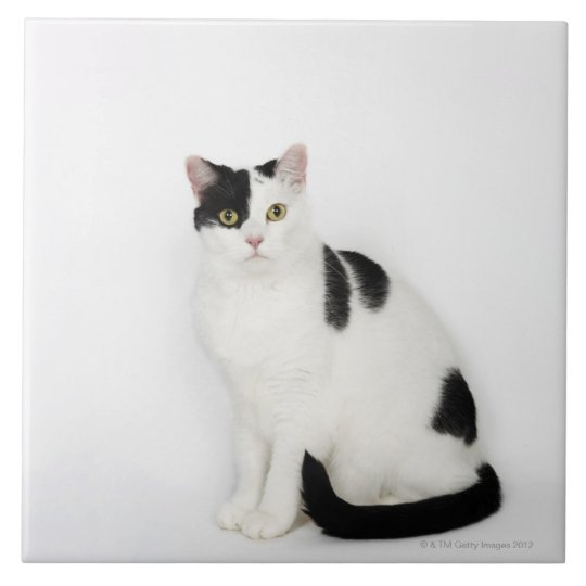 White cat with black spots large square tile