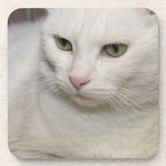 WHITE CAT WITH GREEN EYES COASTERS