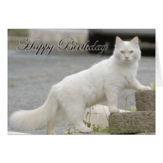 White cat with Happy Birthday Card