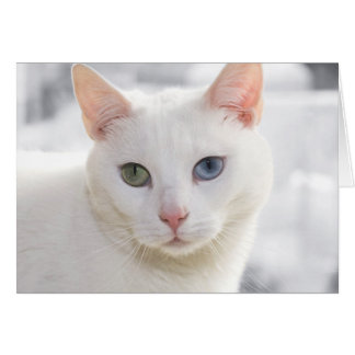 white cat with odd eyes greeting card