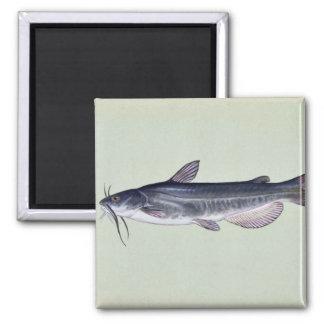 White catfish refrigerator magnets