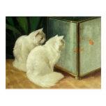 White Cats Watching Goldfish Postcard