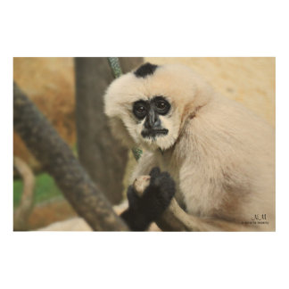 White-Cheeked Gibbon Wood Wall Art