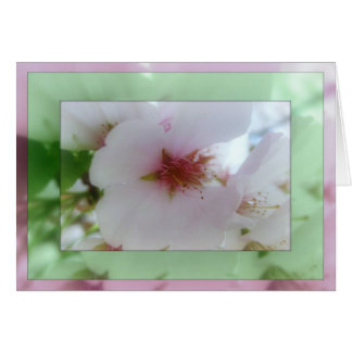 White Cherry Blossom Reflections  Note Card