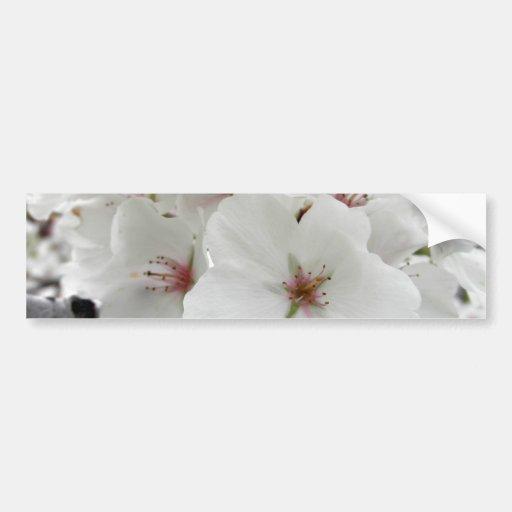 White Cherry Blossoms Photo Bumper Stickers