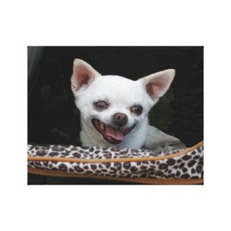 White Chihuahua Canvas Canvas Print