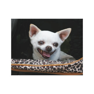 White Chihuahua Canvas Stretched Canvas Print