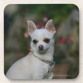 White Chihuahua Drink Coaster