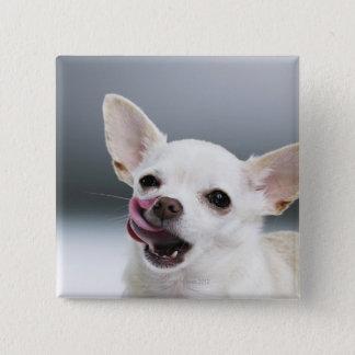 White Chihuahua licking lips 15 Cm Square Badge