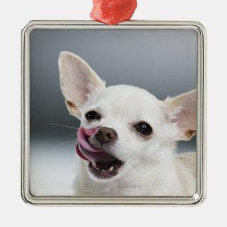 White Chihuahua licking lips Christmas Ornament
